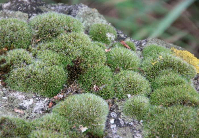10 Easy Pieces The Most Magical Mosses Gardenista