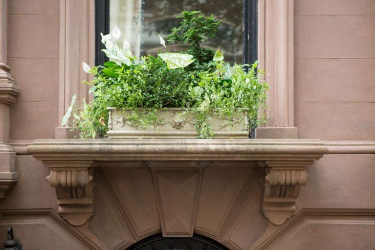 container gardens window boxes by Douglas Lyle Thompson