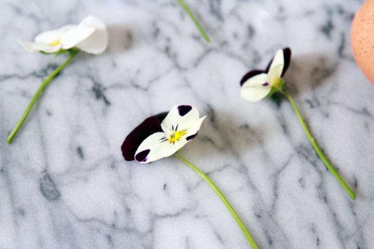 violas-pansies-gardenista