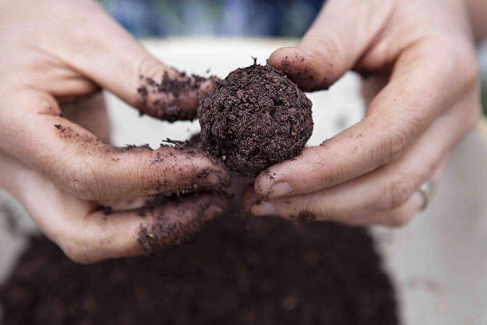 Diy Make Your Own Wildflower Seed Bombs Gardenista