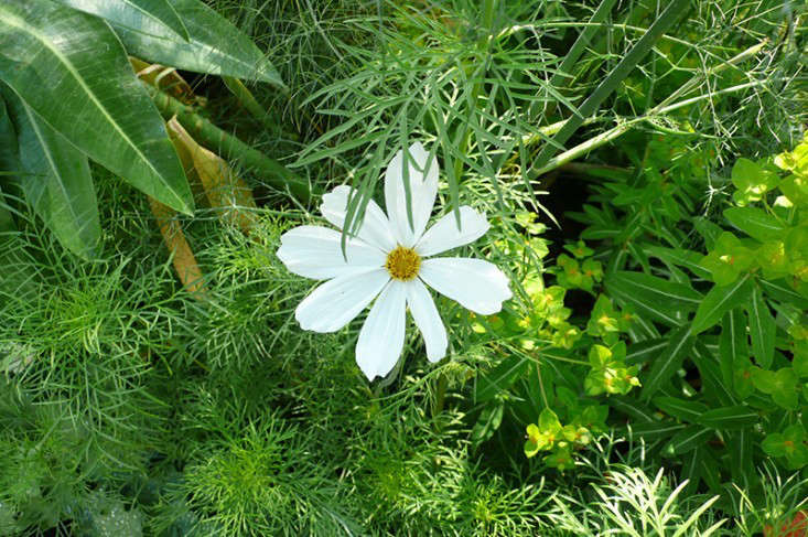 DIY: Make Your Own Wildflower Seed Bombs - Gardenista