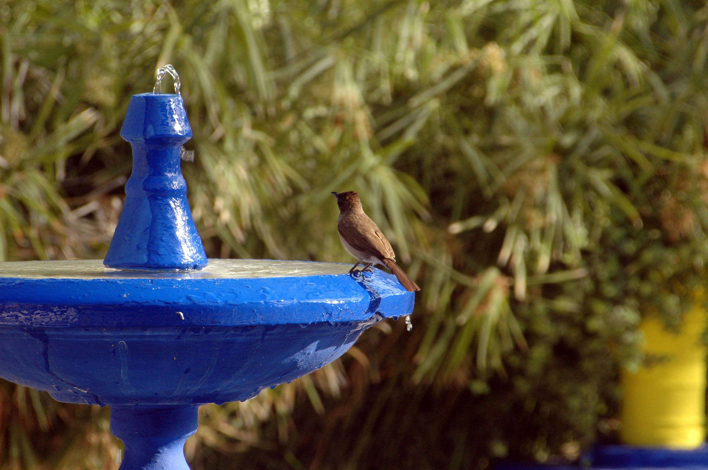 Rhapsody In Blue Jardin Majorelle In Marrakech Gardenista