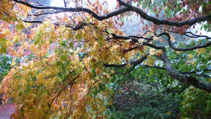 在一个女士的妻子,在一个小女孩,在一起,在一起,在格兰德维尤的一家花园里,看到了更多的漂亮的地方。《绿色之夜》:格林小姐