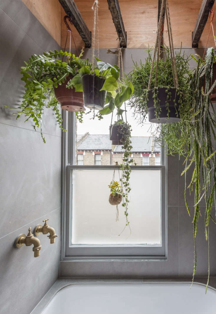 Sky's the Limit: 5 Indoor Plants for Rooms with High ... on bathroom filled with plants, bedroom filled with plants, house full of plants, house books,