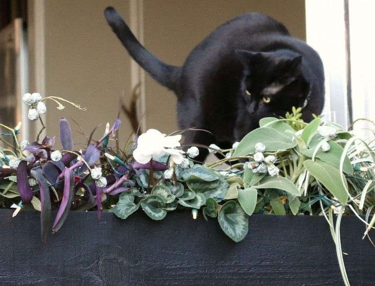 Ask The Expert Will A Poisonous Plant Really Kill Your Pet