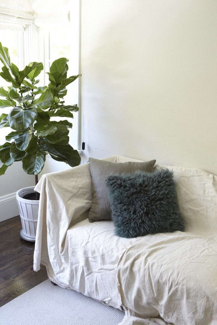 A fiddle leaf fig tree goesmobile.Photograph by Katie Newburn. For more, see Houseplants in the Bedroom, Teen Edition.