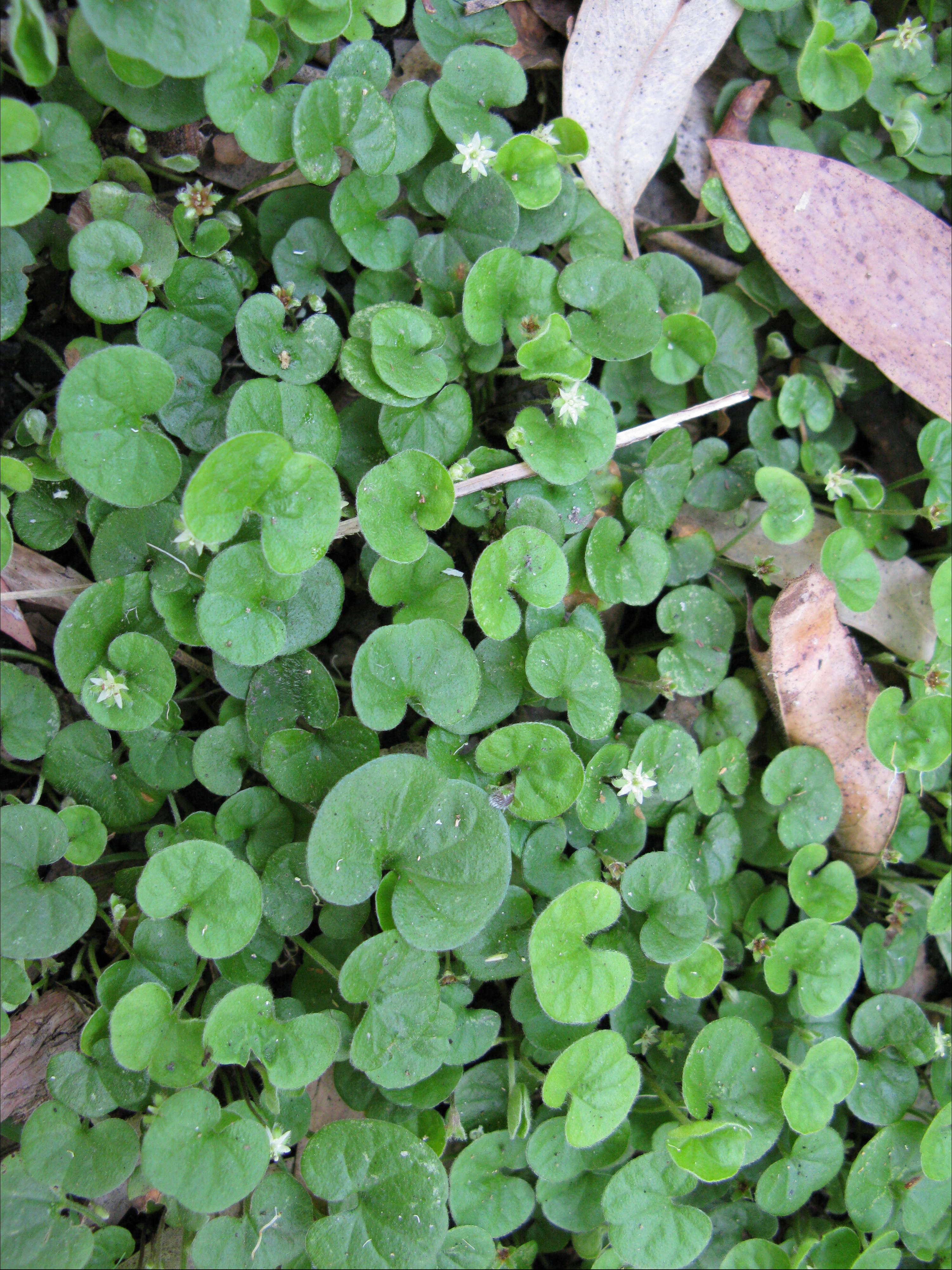 How to plant ground cover between pavers - O Neill Rose Architects Created A Transition Between Pavers And Irish Moss Black Mexican River Rocks Irish Moss Is 5 29 For Three From Direct Gardening