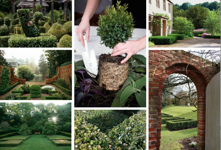 boxwood-field-guide-collage-gardenista