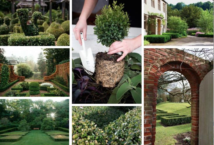 Boxwood Field Guide Collage Gardenista