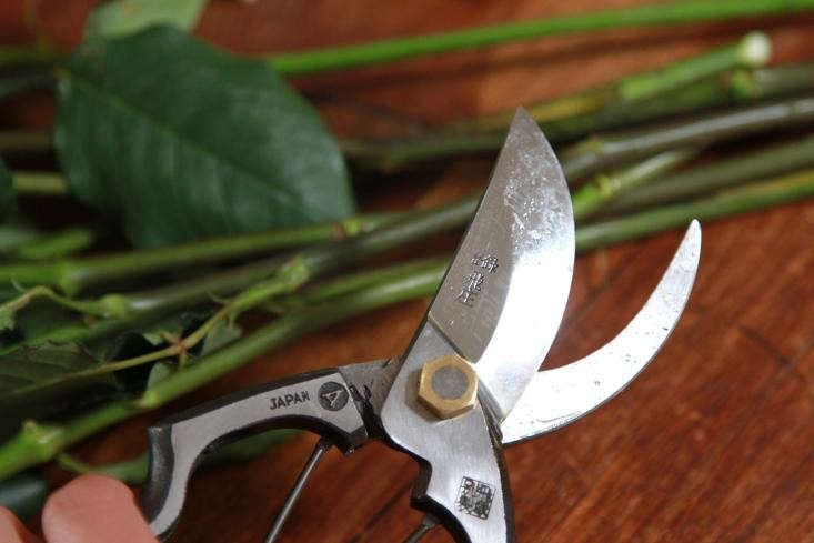 Get in the habit of giving your pruners a good wash after each use. If I make only a few snips I&#8