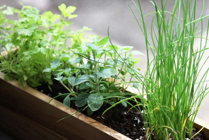 herbs window box by Erin Boyle