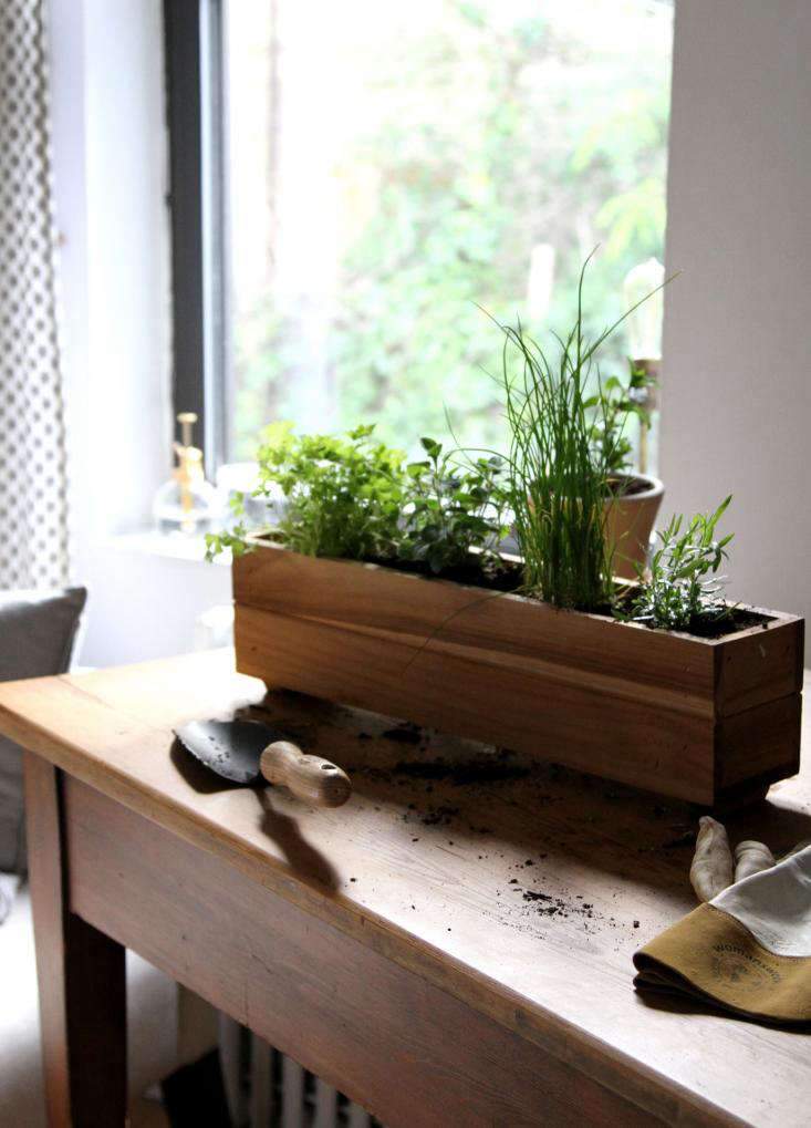 Chives and parsley are among the herbs you can grow in a partly shady spot. See more in Urban Gardening: Shade-Tolerant Herbs to Grow in Your Apartment. Photograph by Erin Boyle.