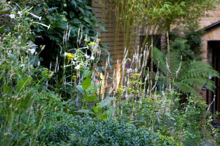 Chris Moss White Garden Verbena Nicotiana Salvia Gardenista