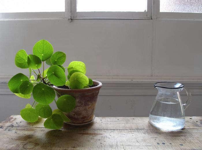 See more in The Plant Portraits of Mieke Verbjilen. Photograph by Mieke Verbjilen.