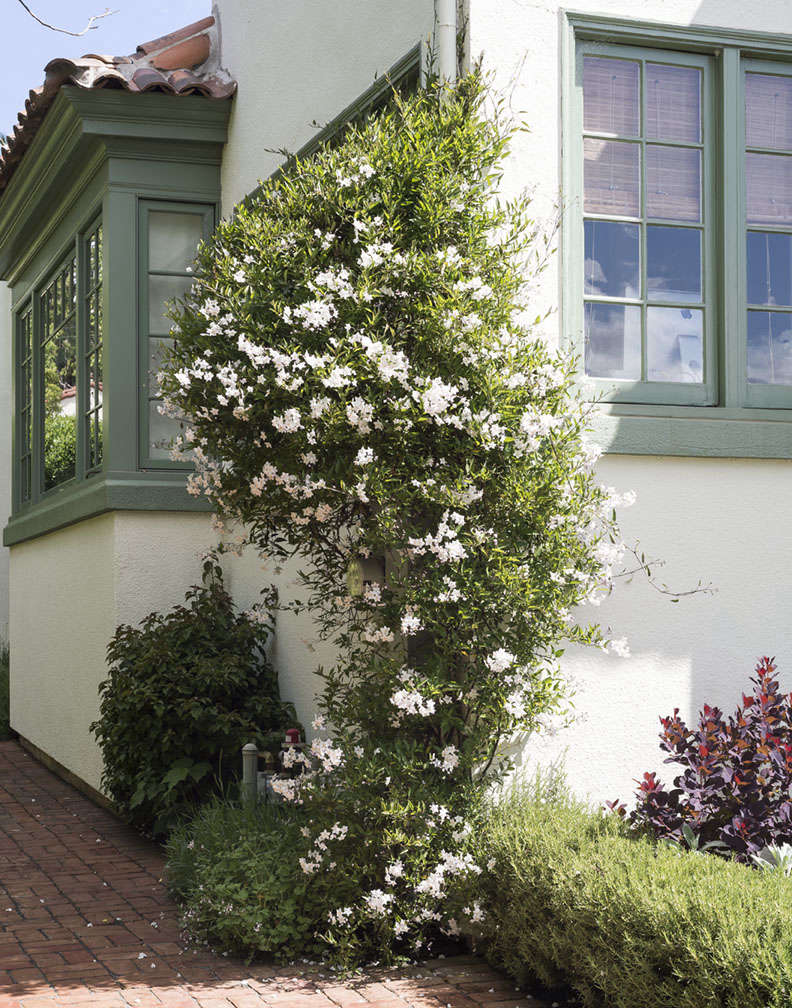 9 ways to create curb appeal with flowering vines and climbers photograph by matthew williams mightylinksfo