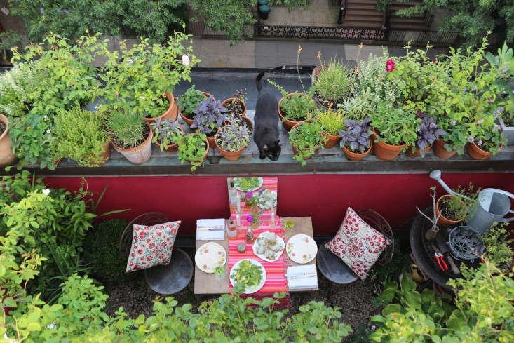 66 Square Feet Brooklyn Balcony Garden Aerial Gardenista