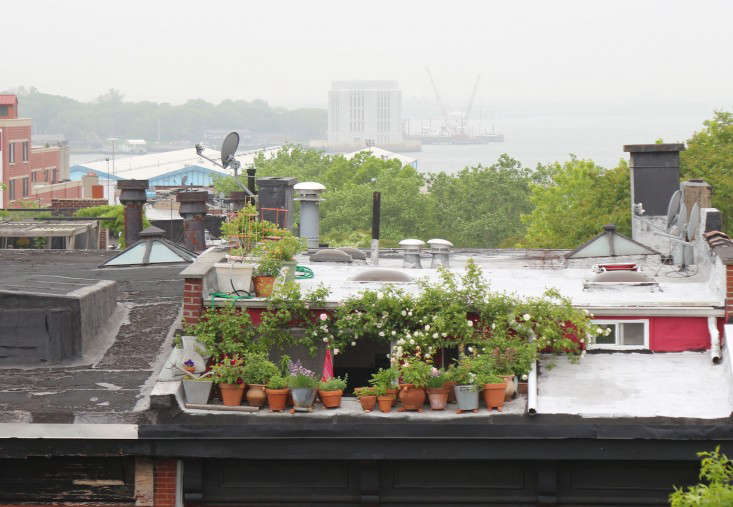 66-square-feet-brooklyn-balcony-garden-gardenista