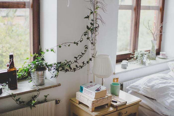 above a climbing vine from steal this look vine with bedroom - House Plants Vines