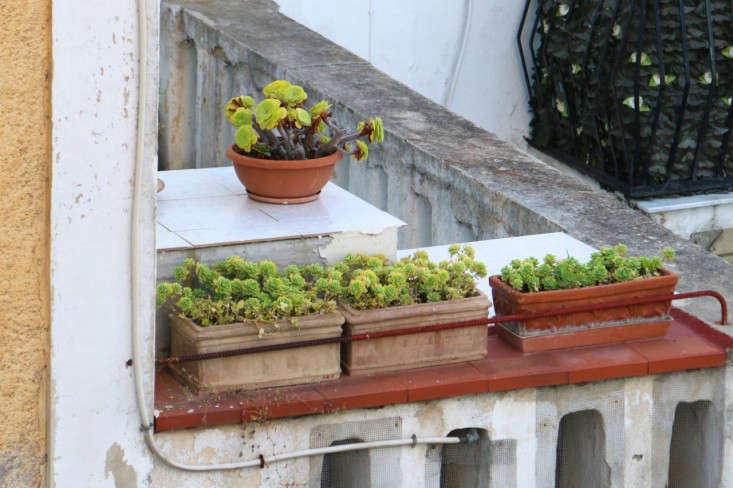Gardening 101: How to Prevent Cracks in Terra Cotta Planters