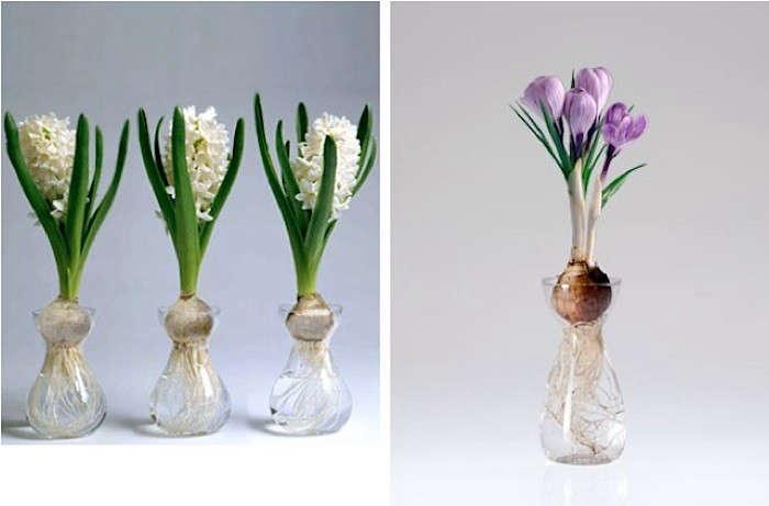 10 Easy Pieces Bulb Vases Gardenista