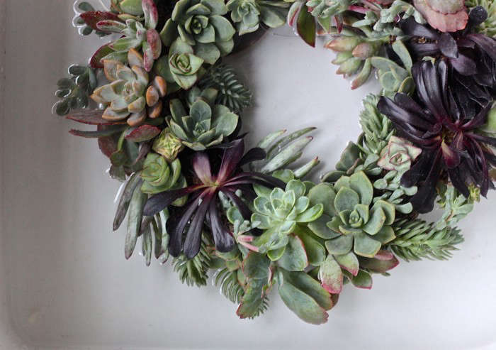 Diy A Succulent Wreath To Display All Year Gardenista