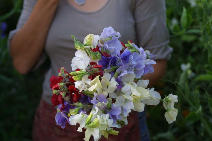 DIY sweetpeas cutting garden 10; Gardenista