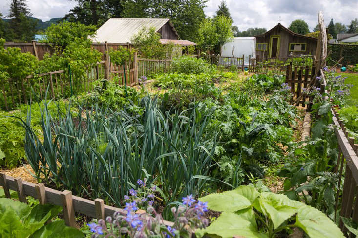 Vote For The Best Edible Garden In The Gardenista Considered