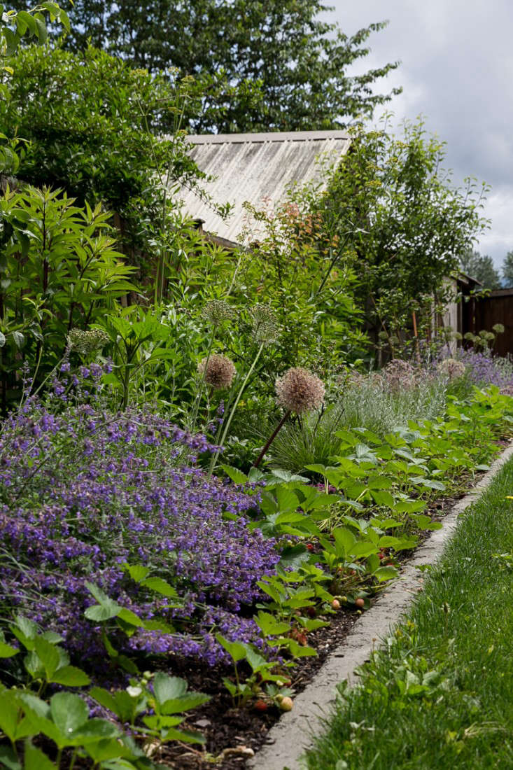 Vote for the best edible garden in the gardenista considered design above along the edible perennial border strawberries are mixed with alliums cat mint and blueberry bushes mightylinksfo