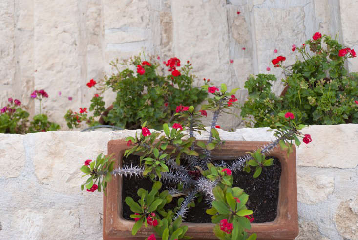 10 Garden Ideas to Steal from Greece - Gardenista