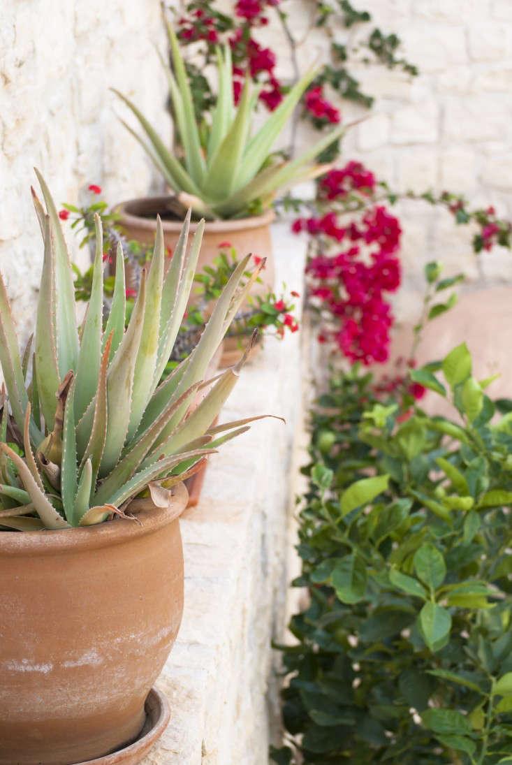 Superbe Greek Garden Crete Eleni Psyllaki 20 Gardenista