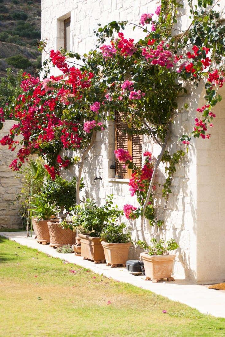9 Garden Ideas to Steal from Greece - Gardenista