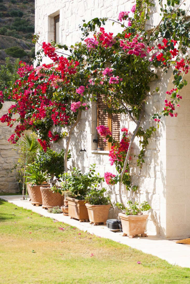 Hanging Plants Outdoor Fence