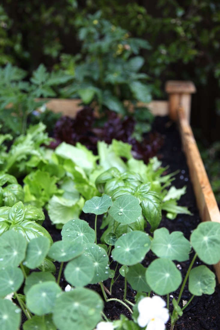 Nature Care Organic Raised Bed Soil Home Depot