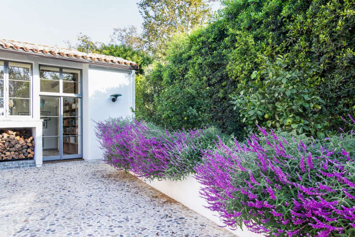 Salvia and citrus trees line the driveway.
