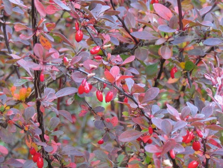 Native Plants 10 Alternatives To Invasive Garden Invaders