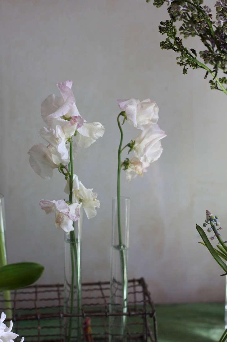 Test drive which cut flowers last longest gardenista day 4 reviewsmspy