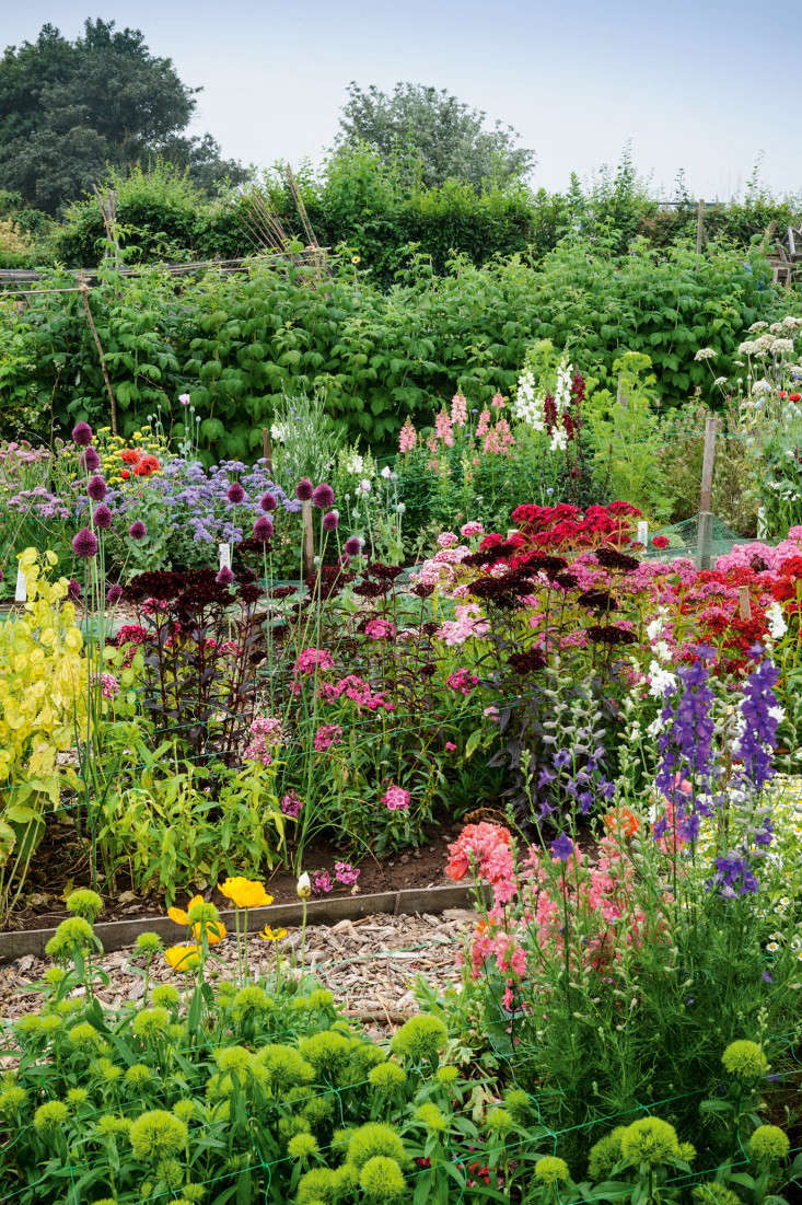 Required reading the cut flower patch gardenista for Best flowers for cutting garden