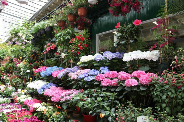 A Walk Through One Of Paris Last Flower And Bird Markets Gardenista