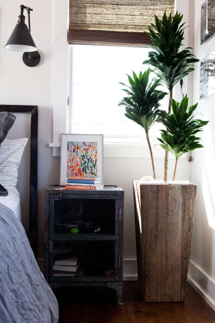 Design home plants pictures.