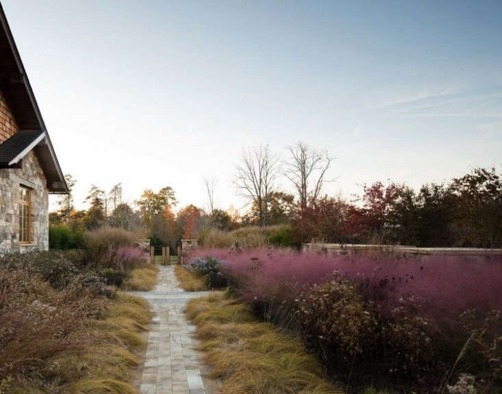 Landscape architect firm Nelson Byrd Woltz designed22 acres in Virginiawith native species including featheryPink Muhly Grasstocreate a pink wash in autumn afterother plants turnbrown or loseleaves.Photograph by Eric Piasecki/OTTOcourtesy ofNelson Byrd Woltz Landscape Architects.