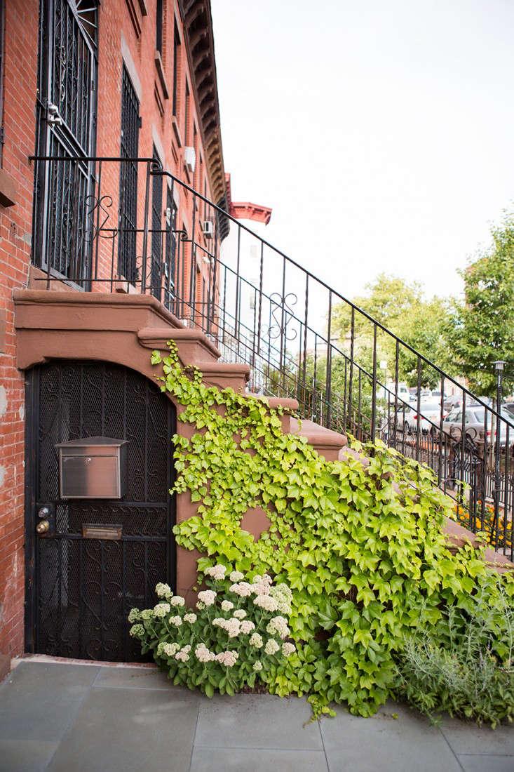Garden Designer Visit A Low Maintenance Brooklyn Backyard