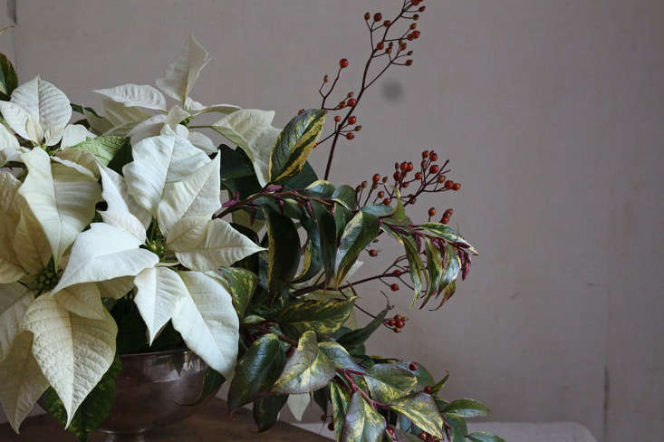 Diy Poinsettia A Common Christmas Plant Goes Luxe