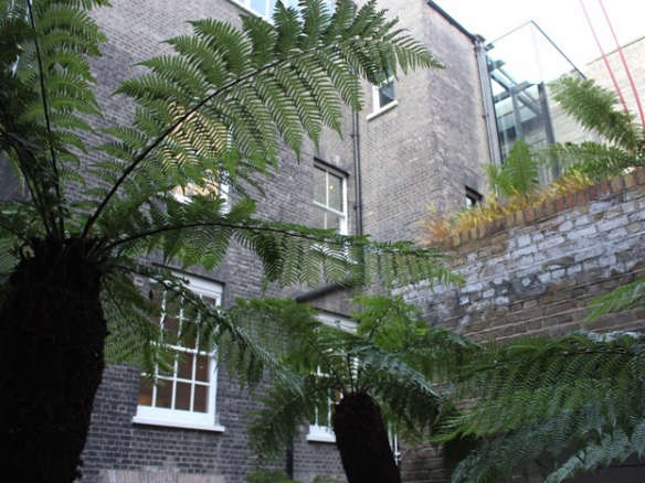 Tree Fern A Field Guide To Planting Care And Design On