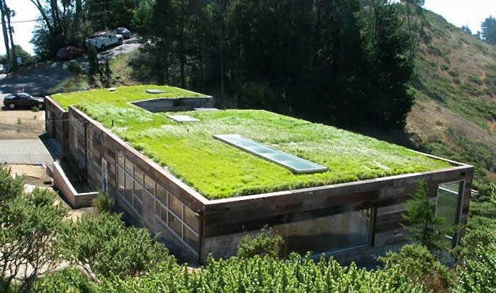 Superieur Rothschild Schwartz Green Roof Sausalito Gardenista