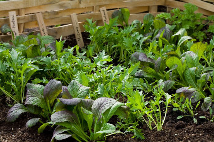 Ask The Expert: Sarah Ravenu0027s 10 Tips For A Kitchen Garden