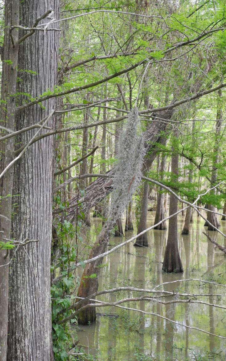 A Trip on the Wild Side: Anahuac Wildlife Refuge in Texas