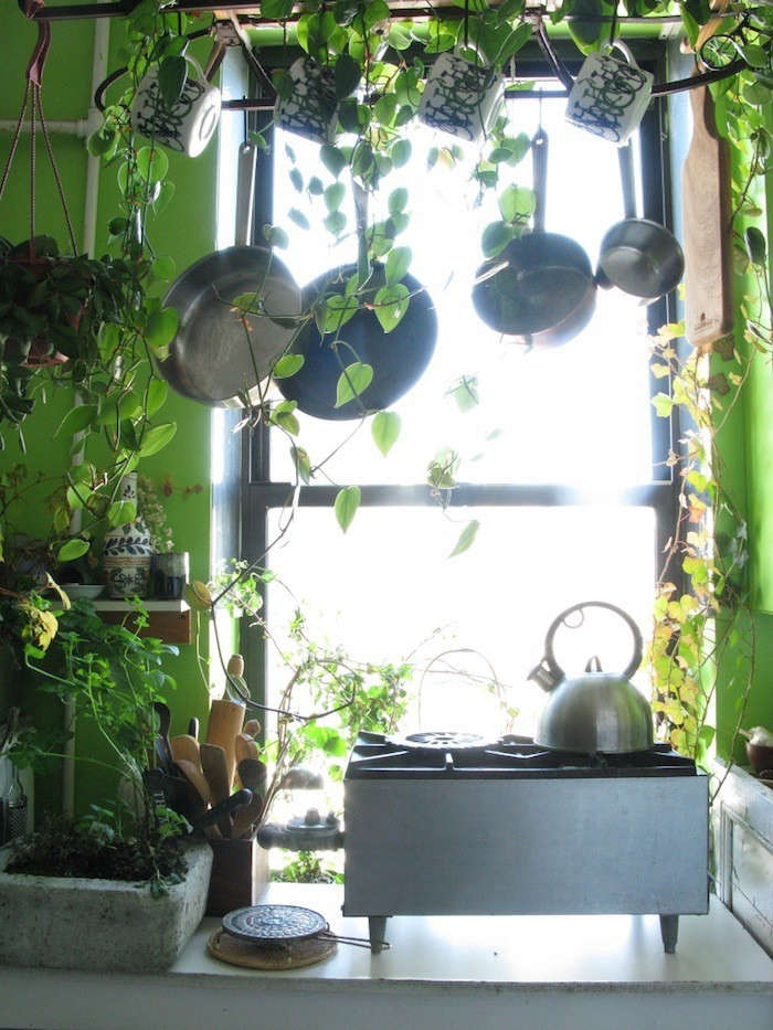 best house plants indoor vines brooklyn kitchen