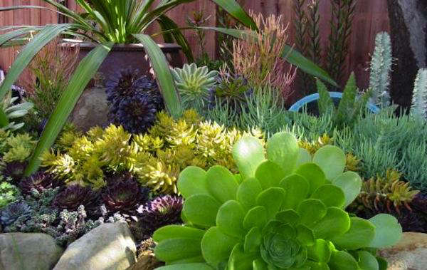 terra sol garden center gardenista