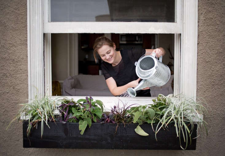 Contributor Meredith Swinehart waters her window box garden with a galvanized watering can. Photograph by Liesa Johannssen for Gardenista, from Container Gardens: 5 Tips for a Perfect Window Box.