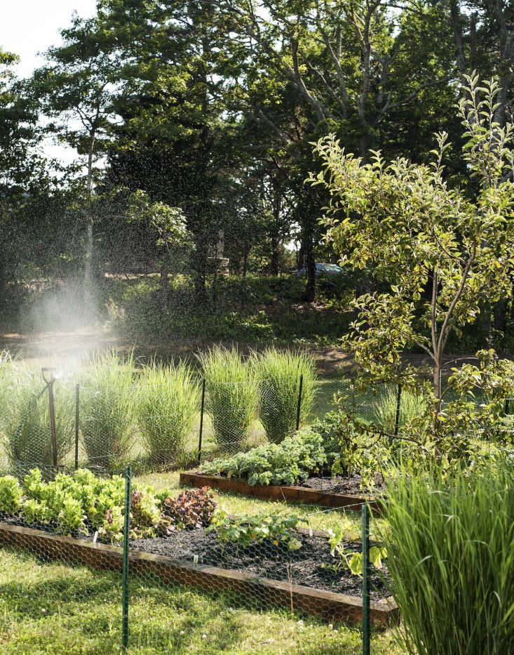 At her Cape Cod home, architect Sheila Bonnell designed raised beds for her kitchen garden. For more, see Architect Visit: A Kitchen Garden on Cape Cod. Photograph by Matthew Williams.